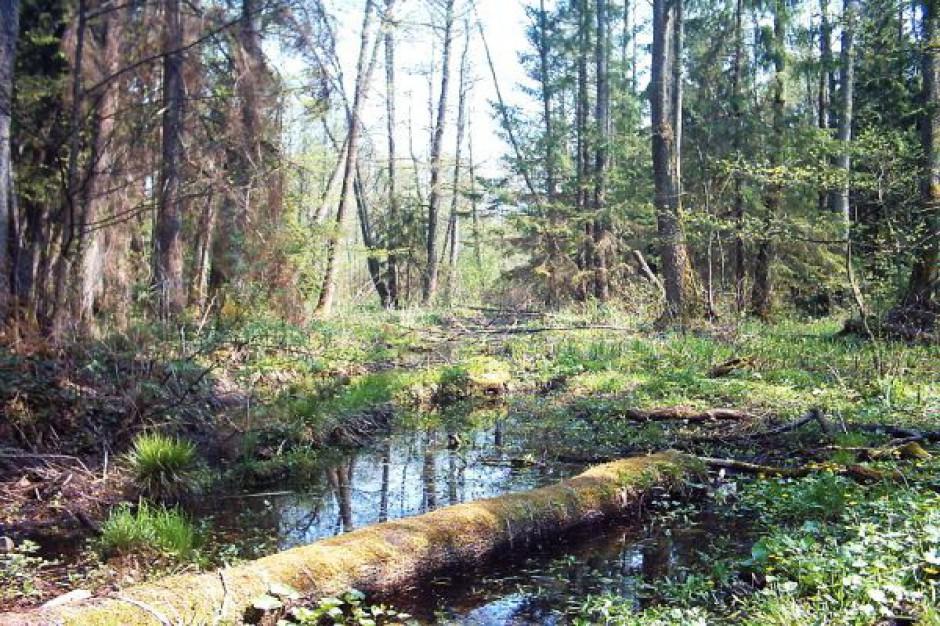 Puszcza Białowieska centrum ekologicznych projektów