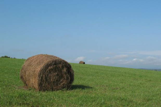 Dopłaty dla rolników znowelizowane