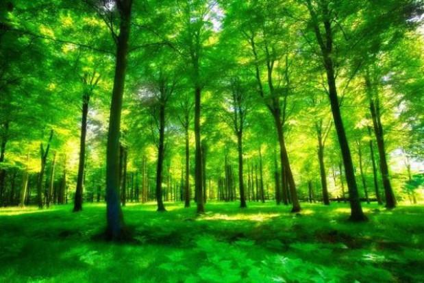 Pieniądze na zalesienie świętokrzyskich lasów