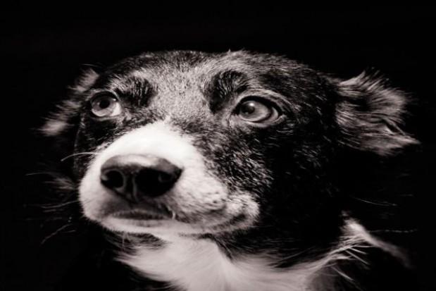 Czipowali psy w Mielcu
