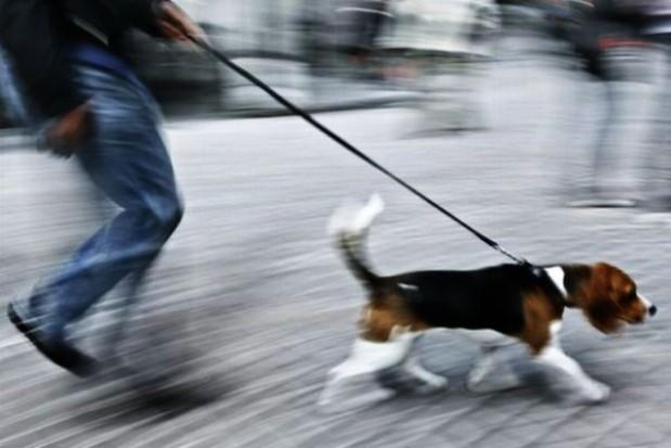 Niehumanitarne środki przy wyprowadzaniu psa