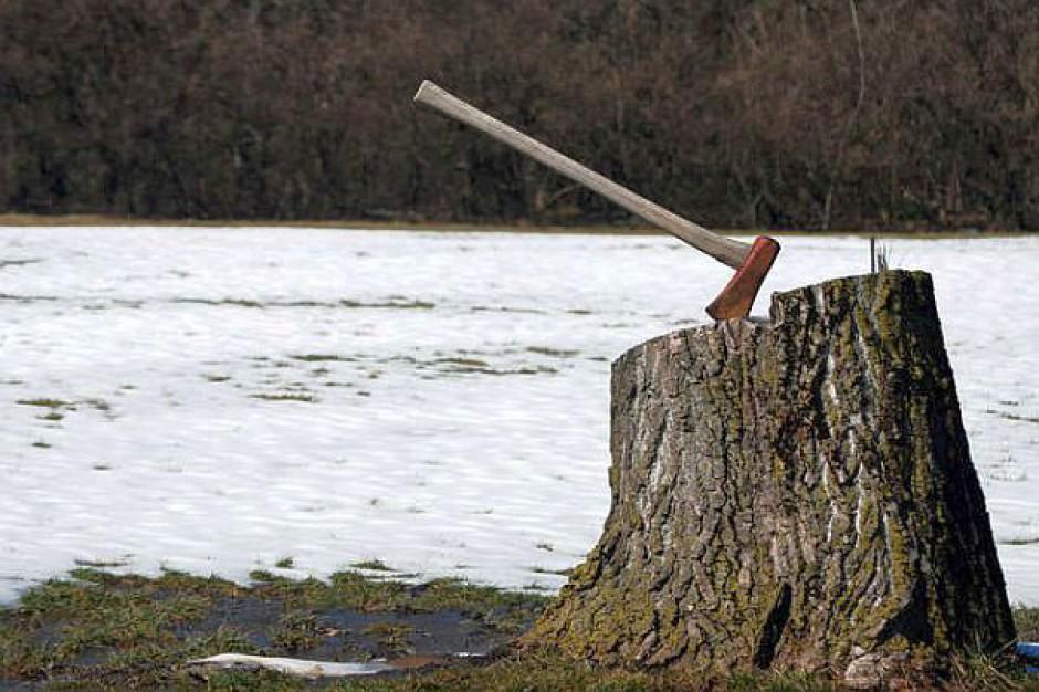 Petycja w sprawie wycinki drzew w Warszawie