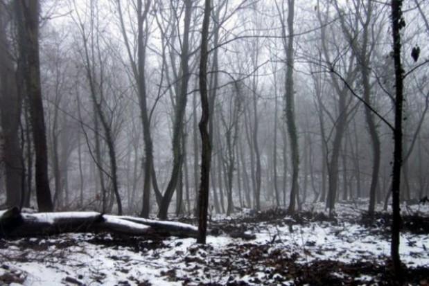 Park dworski w Kurowie odzyskuje dawny blask