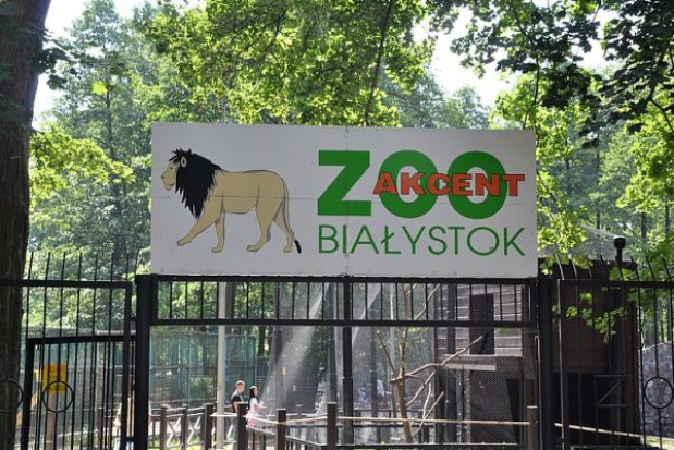 Trzy młode żbiki w białostockim zoo