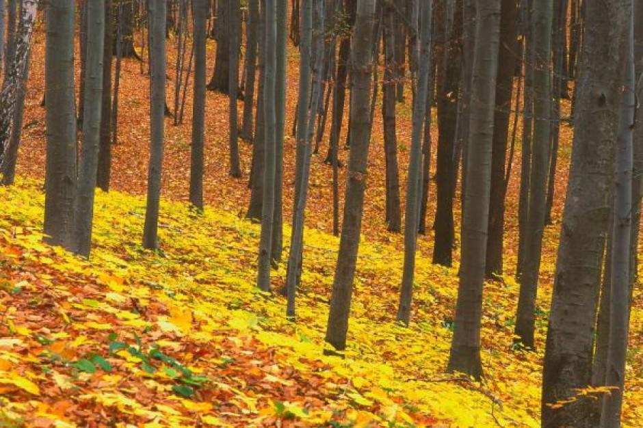 Rozpoczęło się oczyszczanie lasu z niewypałów