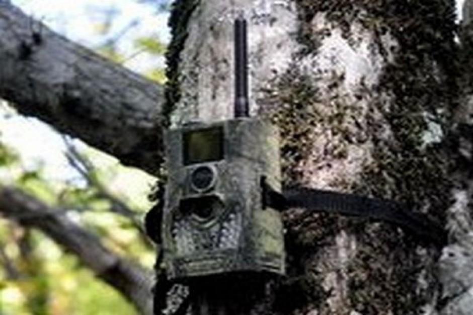 Fotopułapki na zaśmiecających lasy