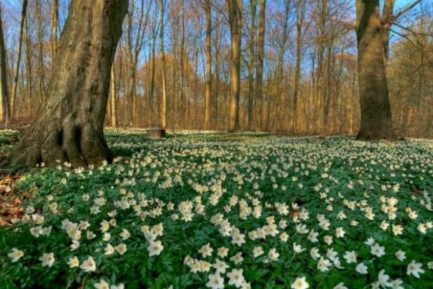 20 mln sadzonek trafi do podkarpackich lasów