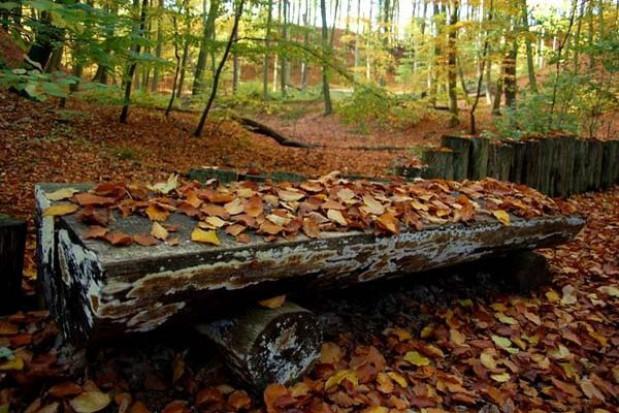 Otwarcie ścieżki zdrowia w Łagowsko-Sulęcińskim Parku Krajobrazowym
