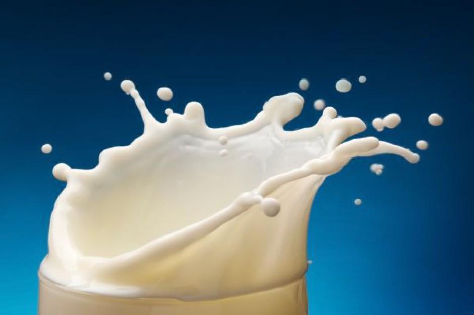Szklanka mleka i owoce w szkole razem