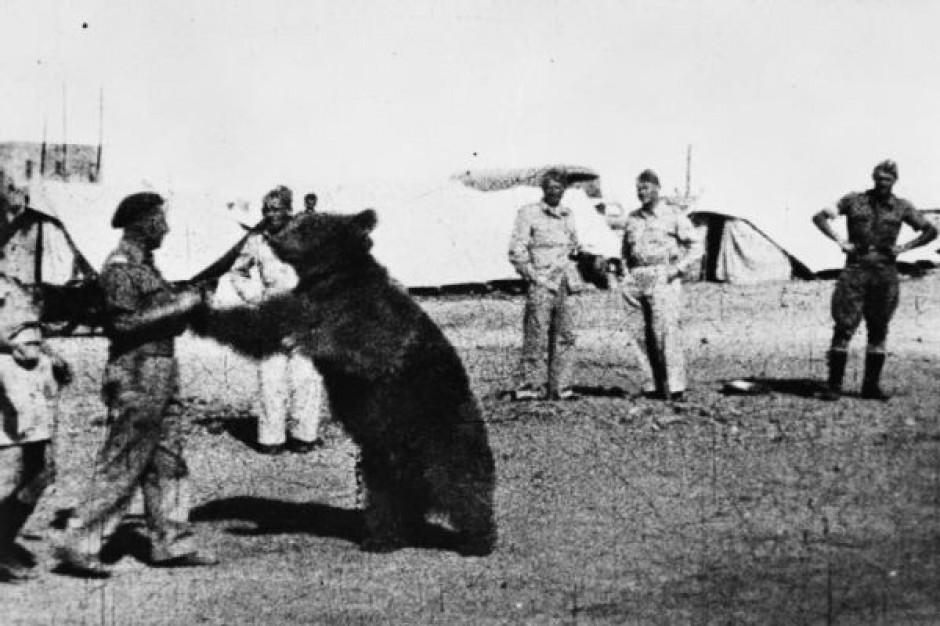 Postawią pomnik niedźwiedzia Wojtka