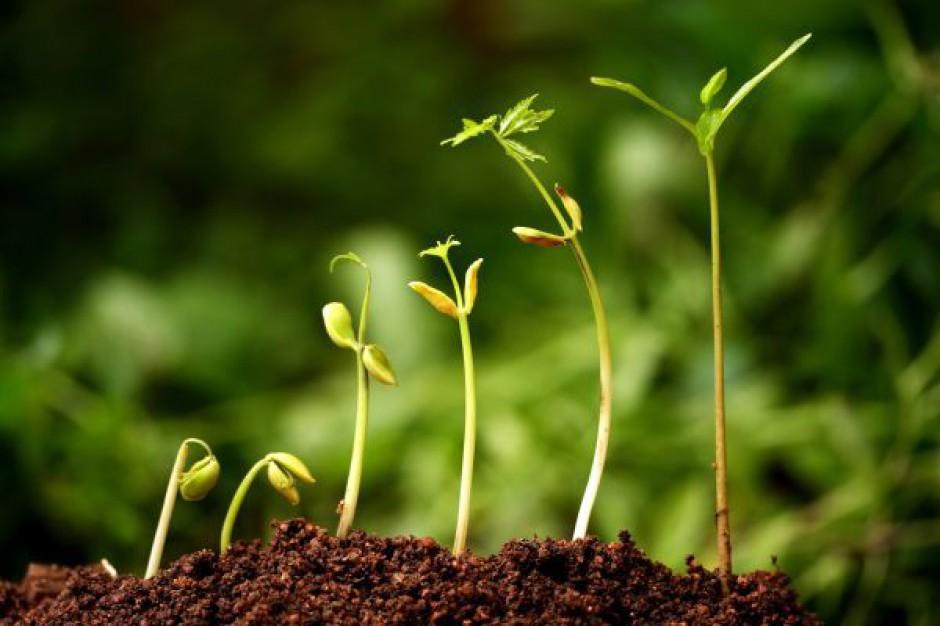 RP popiera projekt ws. ogrodów działkowych