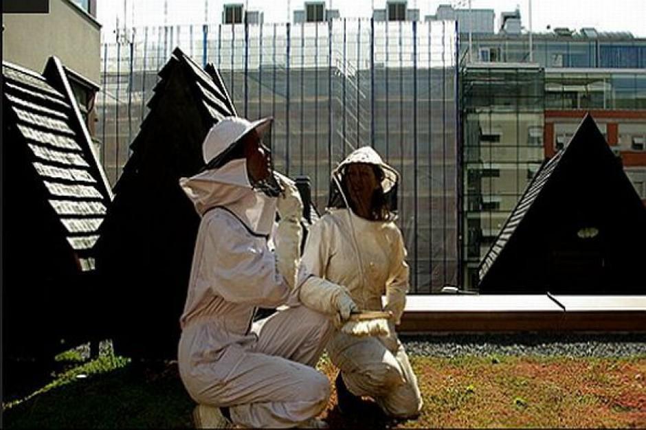 Pszczoły dają liczne korzyści i pracę
