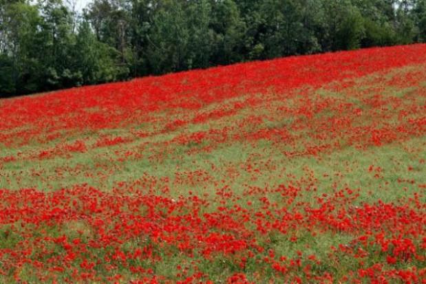 Festyn w rocznicę bitwy o Monte Cassino w Lublinie