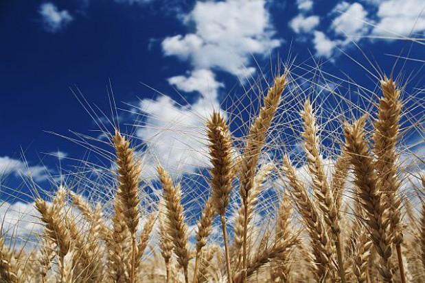 Lokalne decyzje o wsparciu rolnictwa