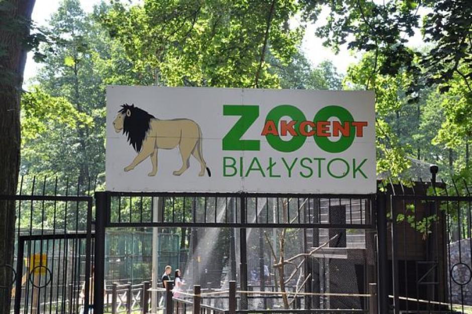 Nowa atrakcja zoologiczna w Białymstoku