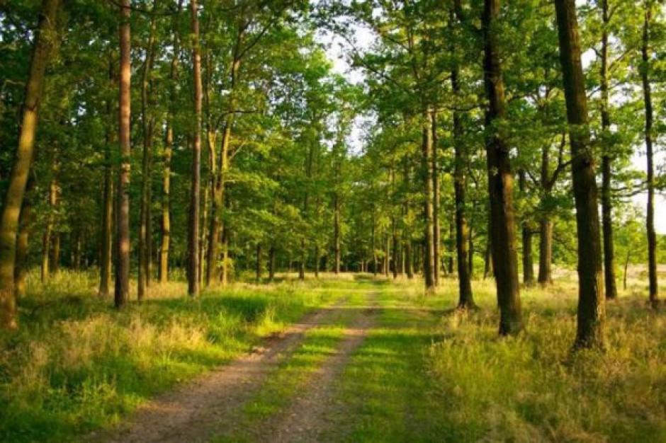 Rola lasów w walce ze zmianami klimatu
