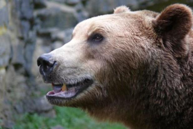 Kamień węgielny pod niedźwiedziarnię