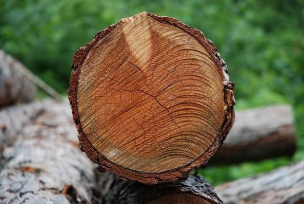 Mniejsze kary za nielegalną wycinkę drzew