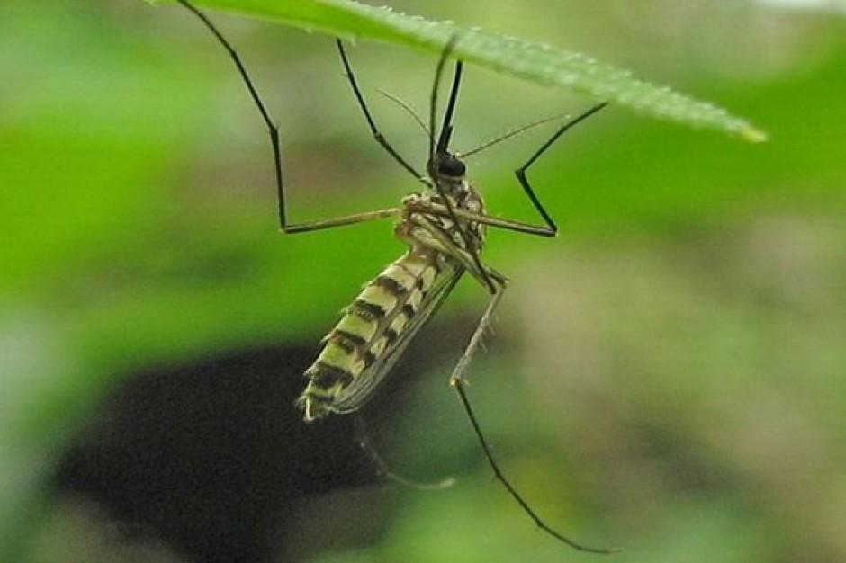 Częstochowa wypowiada wojnę komarom