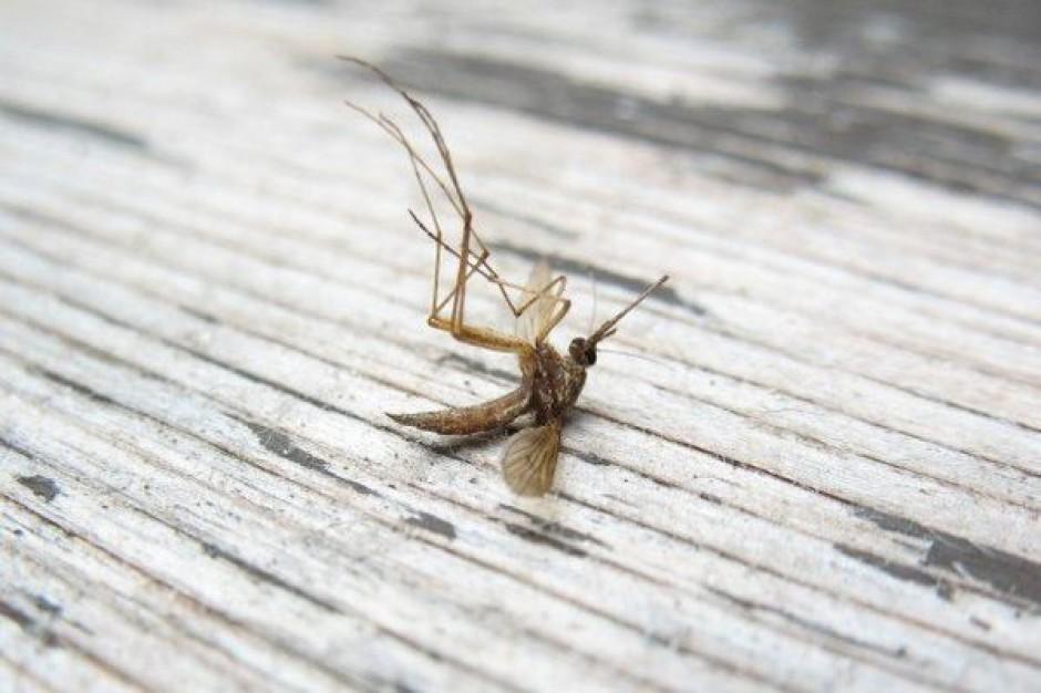 Opole pozbędzie się komarów