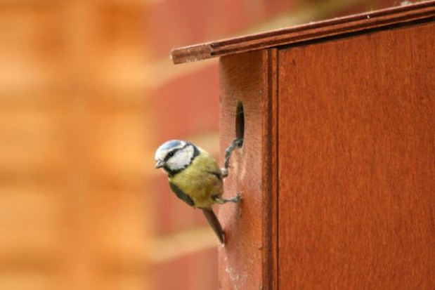Lepsze warunki dla ptaków w Białymstoku