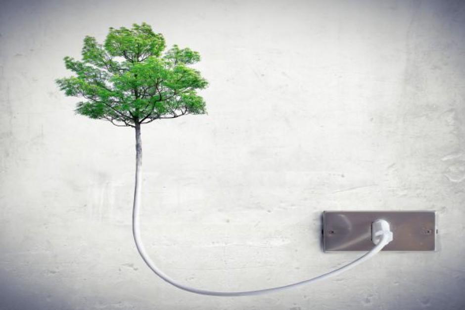Zapaść zielonego prądu