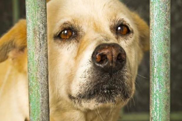 Samorządy z opieką nad zwierzętami na bakier