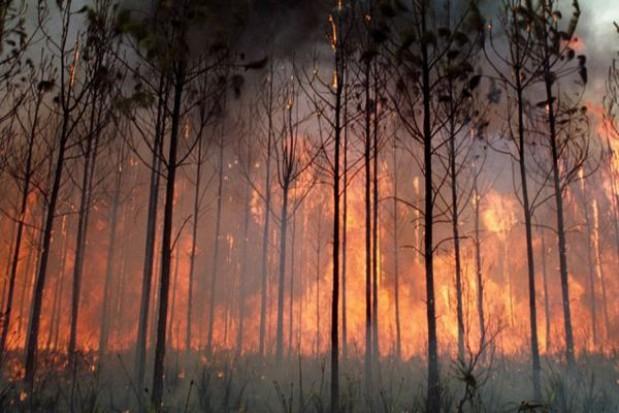 Najwyższy stopień zagrożenia pożarowego w podkarpackich lasach