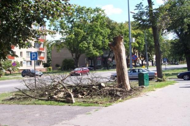 Na ratunek miejskiej zielonej alei