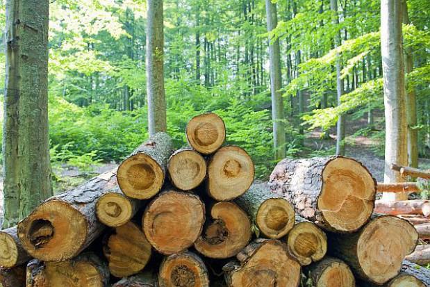 Czy nowy podatek leśny uratuje subwencję ekologiczną?