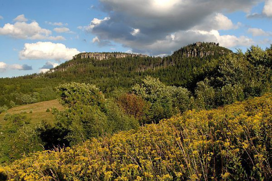 Przyrodnicy posadzili 100 tys. drzew