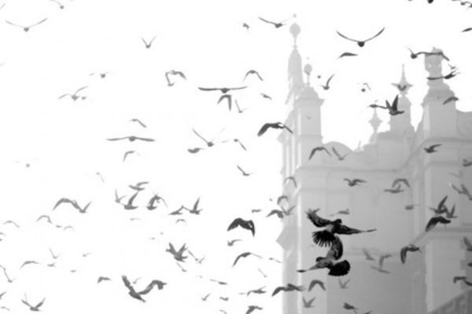 Sztuczne drapieżniki przegonią gołębie?