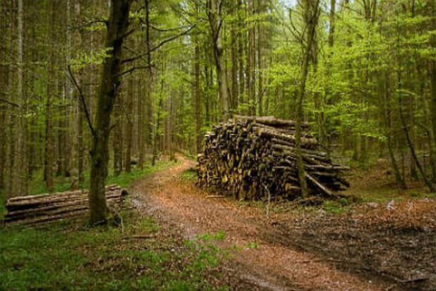 Lasy Państwowe powinny dołożyć się do dróg