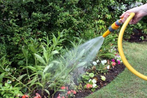 Będzie kompromis ws. ogrodów działkowych?