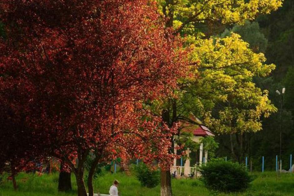 Miasta z Zagłębia odnowią swoje parki
