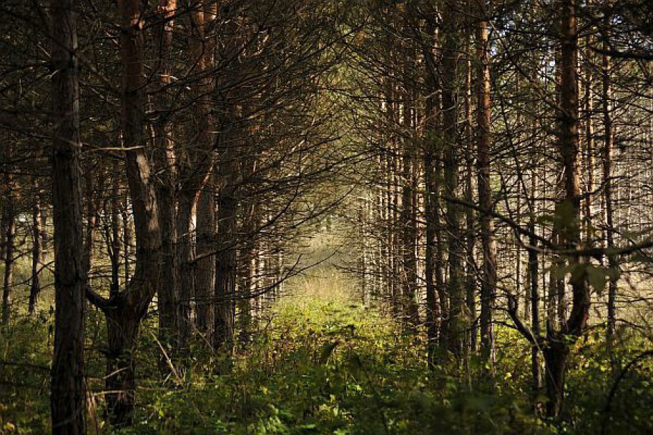 Lasy Państwowe będą musiały płacić miliony?