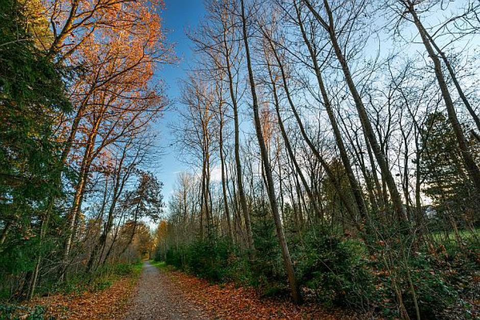 Drogi z kasy pozyskanej od Lasów Państwowych
