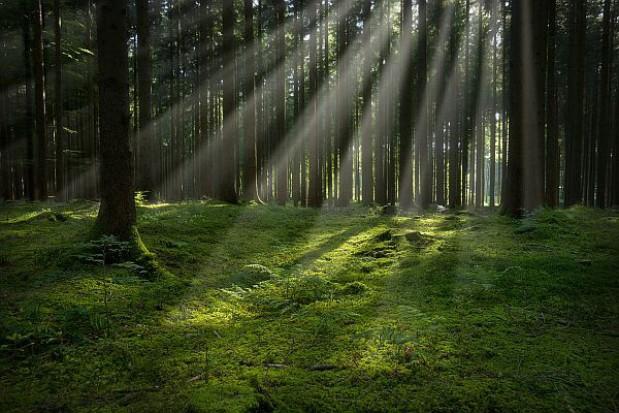 Nie chcą dróg kosztem Lasów Państwowych