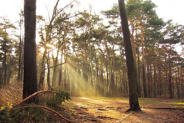 Kto za, a kto przeciw prywatyzacji lasów?