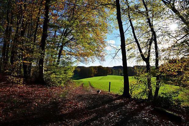 Będzie referendum ws. Lasów Państwowych? PiS zbierze podpisy