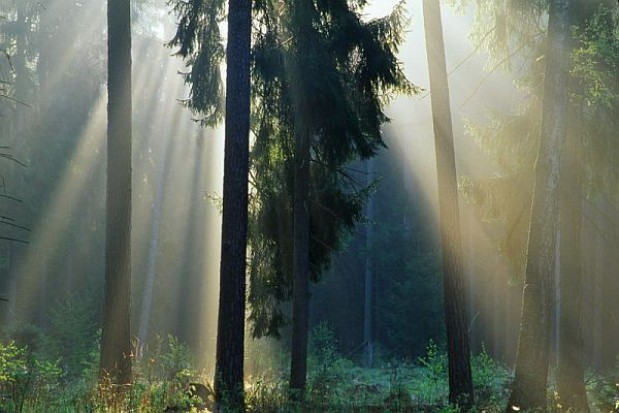 Posłowie nie chcą pośpiechu przy uchwalaniu ustawy o Lasach Państwowych