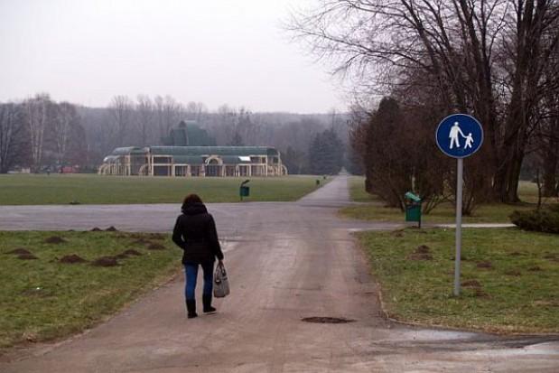 Władze Parku Śląskiego zapłacą karę za wycinkę drzew