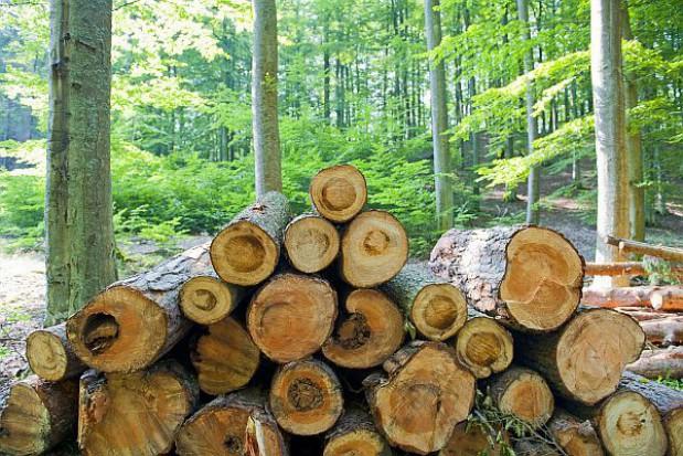 Będą kary za przywóz drewna bez zezwolenia