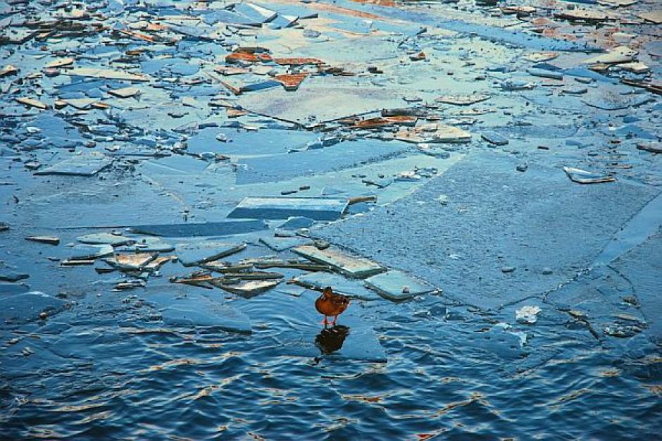 Siedem lodołamaczy pracuje na Odrze i podszczecińskim jeziorze Dąbie