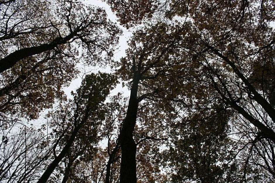 Lasy Państwowe zagrożone? Hołownia chce ich bronić