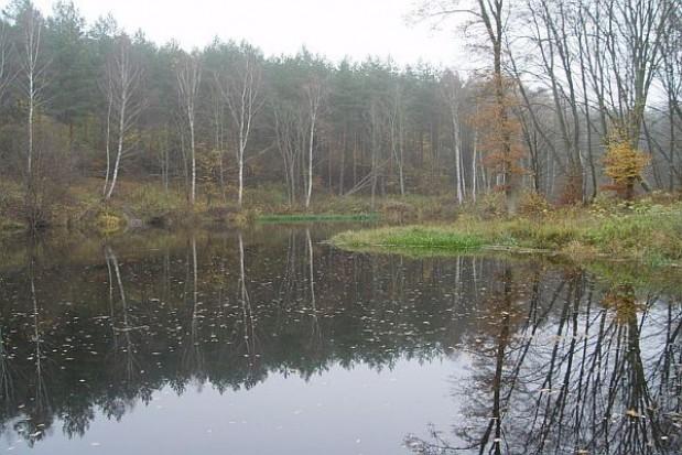Mimo krytyki ustawa o Lasach Państwowych została podpisana