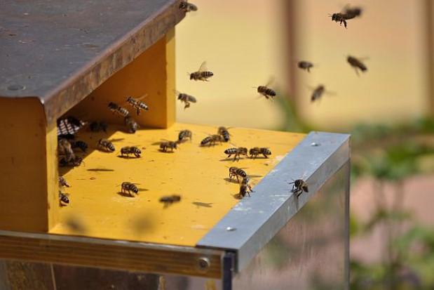 Miasta postawią hotele dla... owadów