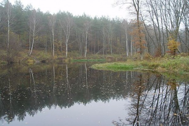 Szykuje się referendum ws. Lasów Państwowych