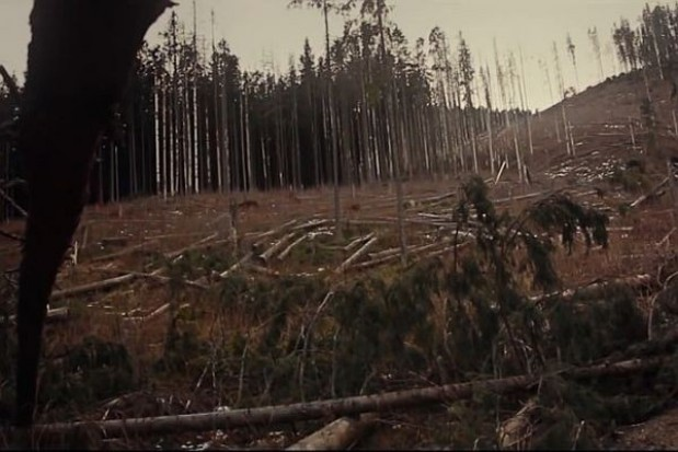 Silny wiatr powalił drzewa w Tatrzańskim Parku Narodowym