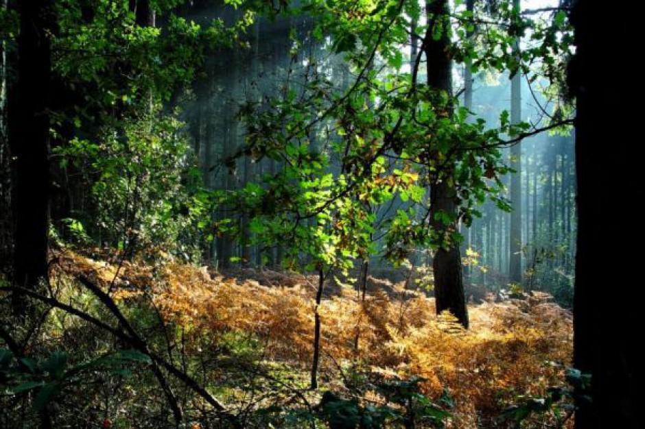 3,4 mld euro na ochronę środowiska i klimatu